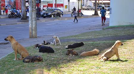 Montes Claros: Prefeitura irá adquirir trailer para castrar animais de rua