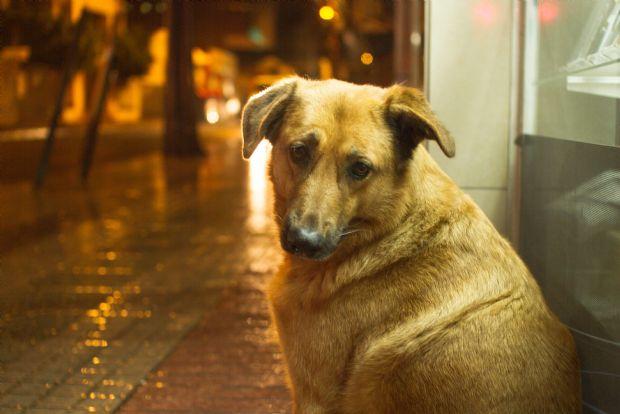Plano regional de controle populacional de cães e gatos é debatido pelo MP em Passos