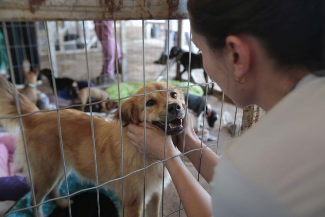 Canil municipal de Uberaba: castração, denúncias, adoção, proteção aos animais