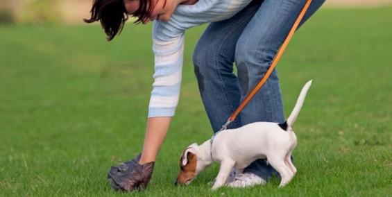 Decisão suspende multa de condomínio por dejetos de pet