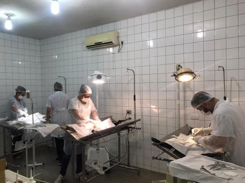 Mutirão prevê 800 castrações para controle populacional e da da leishmaniose em Divinópolis