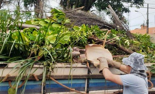 Uberaba: serviços emergenciais são acionados após forte chuva com queda de 30 árvores