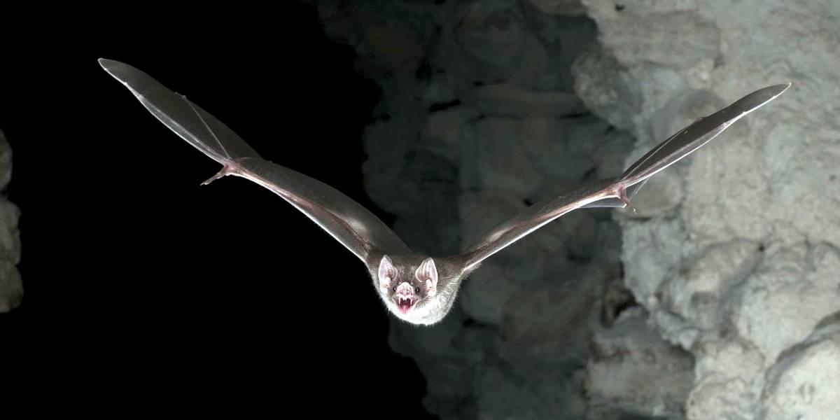 Montes Claros confirma caso de raiva em morcego na região central e intensifica vacinação