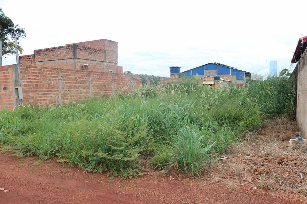 Divinópolis: denúncias de lotes vagos sem limpeza podem ser feitas através de aplicativo