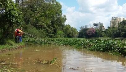 Divinópolis: por lei, retirada de aguapés do Rio Itapecerica volta após período da Piracema