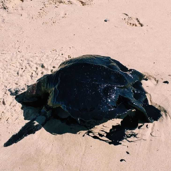 Praias voltam a registrar fragmento de óleo de origem desconhecida