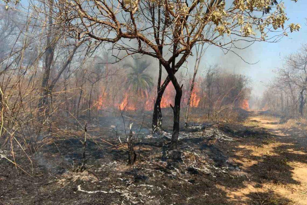 Previncêndio aponta diminuição da área queimada nas unidades de conservação de Minas Gerais