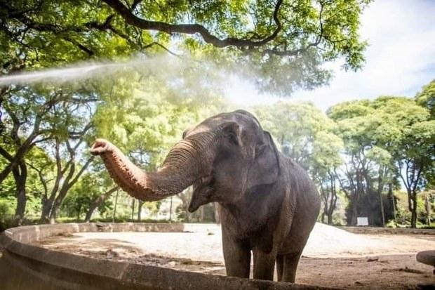 Elefanta aguarda abertura de fronteira para chegar ao Brasil
