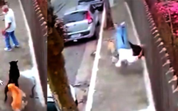 Inusitado: homem de 48 anos é atropelado por cachorros e morre